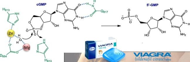 Generic Viagra Mechanism